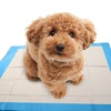Super-Absorbent Indoor Puppy Pads (100ct.)