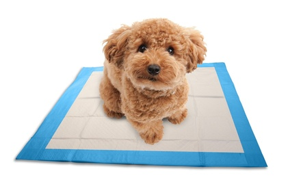 Super-Absorbent Indoor Puppy Pads (100ct.)