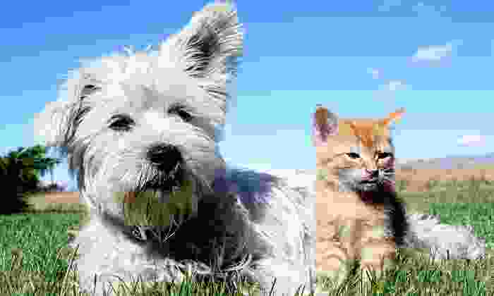 Farmingdale Dog and Cat Clinic - East Farmingdale: Microchipping for One or Two Pets at Farmingdale Dog and Cat Clinic (Up to 61% Off)