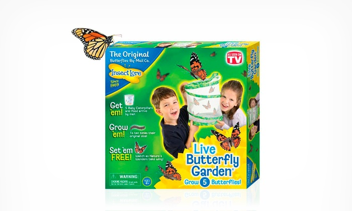 insect lore butterfly garden hatching kit