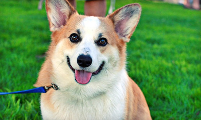 City Dog - Charlotte: 1, 5, or 10 Days of Doggie Daycare or One Night of Dog Boarding at City Dog (Up to 57% Off)
