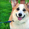 Up to 57% Off Dog Daycare or Boarding