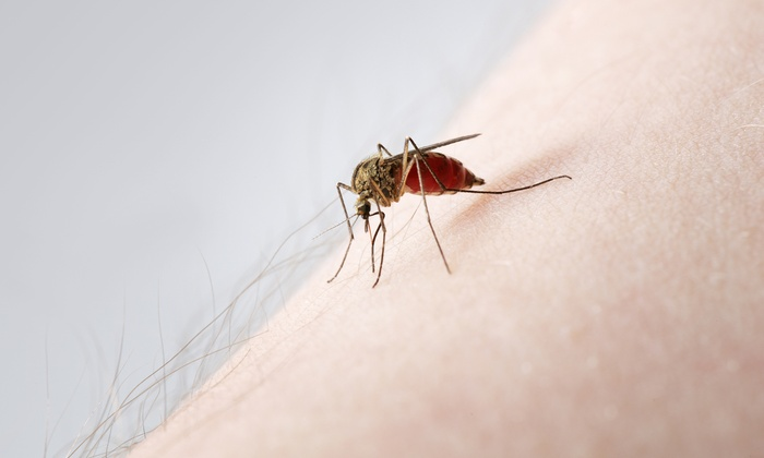 CroppMetcalfe - Washington DC: $69 for a Mosquito Treatment from CroppMetcalfe ($175 Value)