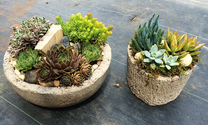 Southeast Succulents - Riverdale: Hypertufa Pottery Class for One or Two at Southeast Succulents (46% Off)