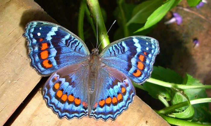 Butterflies For Africa - Pietermaritzburg: Entry to Butterflies for Africa with a Large Juice for Two or Four from R54 (50% Off)