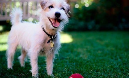Three, Five, or Seven Nights of Pet Boarding with Exam and Bath at River Oaks Animal Hospital (Up to 73% Off)