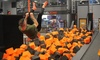 Up to 41% Off Jump Pass or Party Package at SkyZone FortMyers