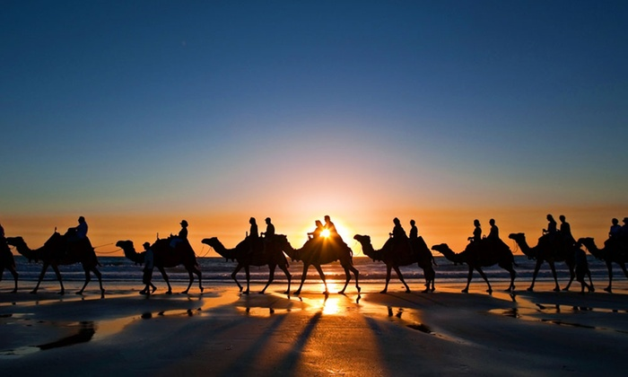 Al dhabi horses camels rental up to 40 off dubai dubai groupon desert camel riding experience altavistaventures Choice Image