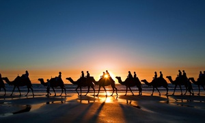Al Dhabi Horses & Camels Rental: One-Hour Desert Safari Camel Riding Experience with Al Dhabi Horses & Camels Rental (40% Off)