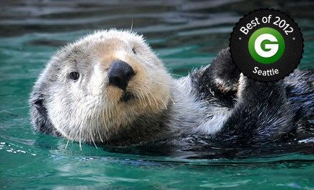 Seattle Aquarium Visit The Seattle Aquarium Groupon