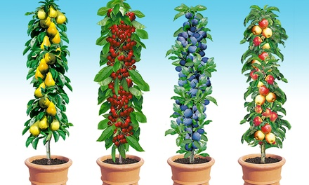 4er, 8er oder 12er-Set Säulenobst Apfel, Birne, Kirsche & Pflaume