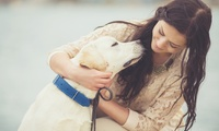 Animal Training and Pet Sitting Online Course from Holly and Hugo (89% Off)