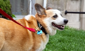 Dependable Pet Services: $15 for $30 Worth of Pet-Sitting and Dog-Walking Services from Dependable Pet Services