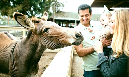 Holiday Petting-Zoo Outing for Four, or One-Year Pass with Feed, Train and Pony Rides at Zoomars (Up to 51% Off)