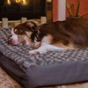 Nap Faux-Fur Orthopedic-Mattress Pet Beds
