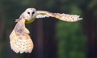 Two-Hour Owl Experience at Knockhatch Adventure Park