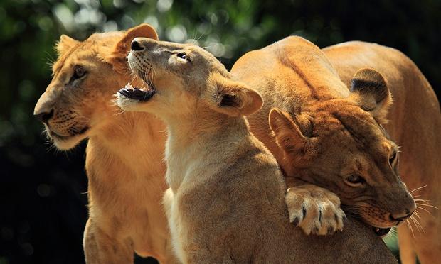 Bali: Admission to Bali Zoo 3