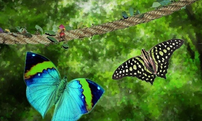 Edinburgh Butterfly & Insect World - Lasswade: Passes to Edinburgh Butterfly & Insect World from £9 (Up to 58% Off)