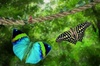 Edinburgh Butterfly & Insect World - Lasswade: Passes to Edinburgh Butterfly & Insect World from £9 (Up to 58% Off)