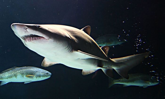 Sea Life Minnesota Aquarium - East Bloomington: Visit for Two or Four to Sharks After Dark Event at Sea Life Minnesota Aquarium (Up to 51% Off).