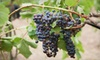Fox Valley Winery Inc. - Oswego: Five Bottles of Red Wine or Private Tasting and Tour for Up to Six at Fox Valley Winery Inc. (Up to 52% Off)