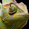 Up to 46% Off Admission to The OK Reptile Expo