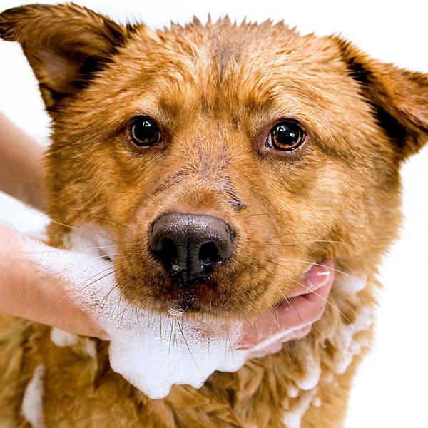 Self Serve Dog Washing Pet Valu Groupon