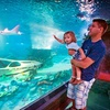 Up to 52% Off at Sea Life Arizona Aquarium