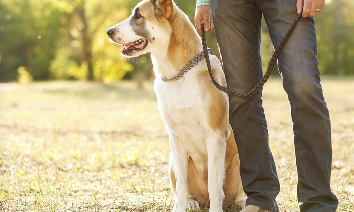 Hemley's Petcare - Seattle: Two Dog Walks from Hemley's PetCare (43% Off)