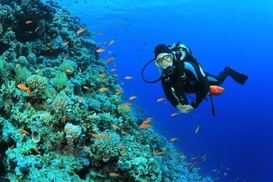 Seas The Day Scuba: $239 for a PADI Open-Water Certification Course at Seas The Day Scuba ($575 Value)
