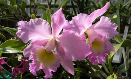 Admission for Two, Four, or Six to South Texas Botanical Gardens & Nature Center (Up to 50% Off)