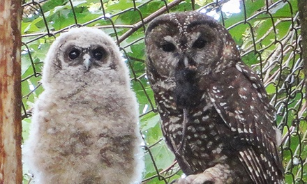 Adoption of an Owl and Tour for Two or Four at Mountain View Conservation & Breeding Centre (Up to 62% Off)