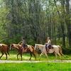 Half Off Horseback Riding in Lamar