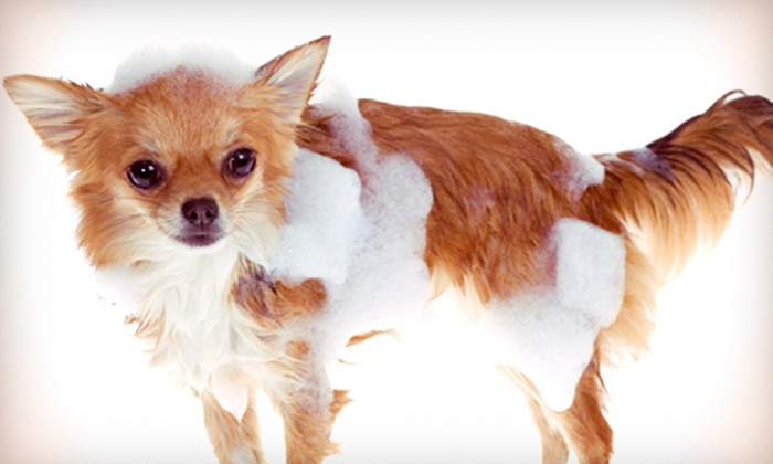 Little Critter's Salon - Hazlehurst: Two Grooming Sessions for a Small, Medium, or Large Dog at Little Critter's Salon (Up to 69% Off)