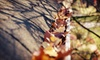 Bellaire Yard Care - Toledo: Gutter Cleaning, Lawn Aeration with Seeding, or Both from Bellaire Yard Care (Up to 52% Off)