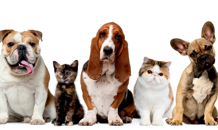 Petropolis Pet Center - Chesterfield: Five Days of Dog Daycare or $40 for $100 Worth of Dog or Cat Boarding at Petropolis Pet Center