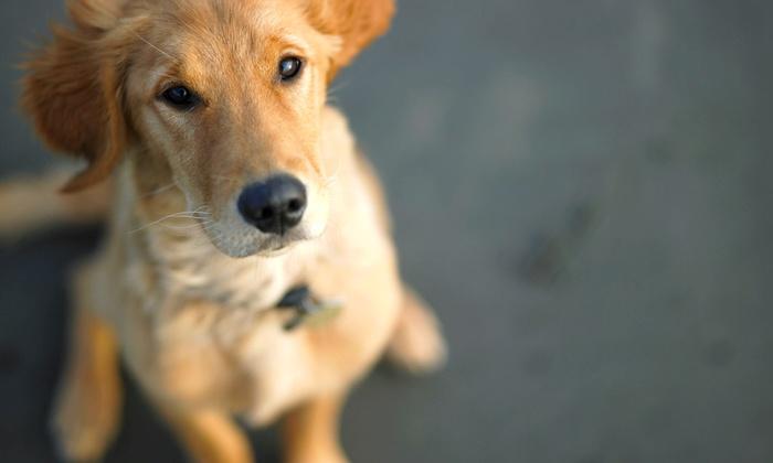 We Walk'em - Chicago: Three or Five Groupons, Each Good for a Half-Hour Dog-Walking Session from We Walk'em (50% Off)