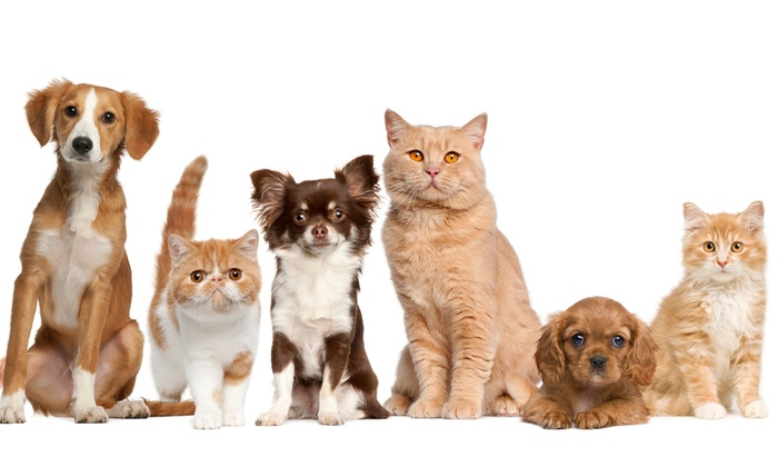 Heritage Veterinary Medical Center - San Antonio: Two Nights of Boarding for a Cat or Dog at Heritage Veterinary Medical Center (Half Off)