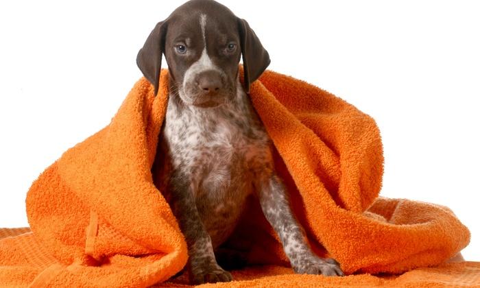Meadowlake Pet Resort - South Acres/ Crestmont Park: Dog Grooming, Furminator, or Dog Bath Package at Meadowlake Pet Resort (Up to 50% Off). 12 Options Available.