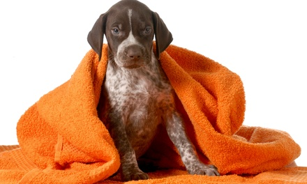 Dog Grooming, Furminator, or Dog Bath Package at Meadowlake Pet Resort (Up to 50% Off). 12 Options Available.