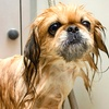 Up to 56% Off Dog Grooming