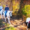 Up to 58% Off Horseback Trail Ride at Allimax Farm