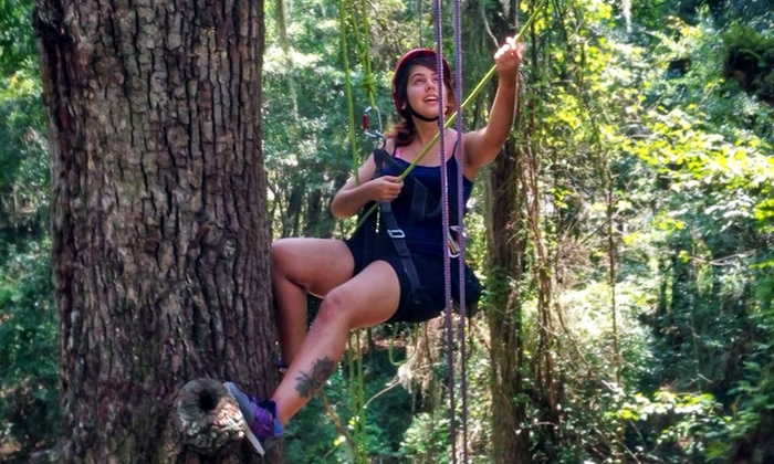 Canopy Climbers, LLC - Gainesville: Guided Canopy Climb for Two or Four from Canopy Climbers, LLC (Up to 50% Off)