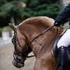 Up to 56% Off Horse-Riding Lessons in Enumclaw