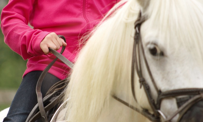 Ainsley Riding Academy - Versailles: Two or Four 45-Minute Private Horseback-Riding Lessons at Ainsley Riding Academy (Up to 57% Off)