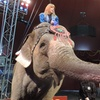 Shrine Circus – Up to 47% Off