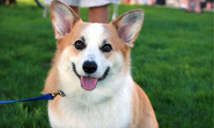 Club Wags - Silver Spring: Mobile Dog-Grooming Session or $12 for $25 Worth of Pet Supplies from Club Wags. Five Options Available.