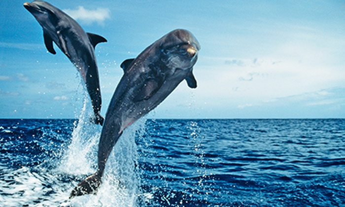 Jax Water Tours - Vilano Fishing Pier : Dolphin-Safari Cruise for Two, Four, or Six from Jax Water Tours (Up to 54% Off)