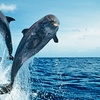 Up to 54% Off Dolphin-Safari Cruise for 2, 4, or 6