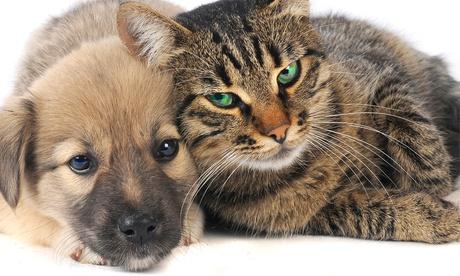 Estancia de hasta un mes para 1 o 2 mascotas desde 9 € en Residencia Canina y Felina Barcelona, 18 opciones Oferta en Groupon